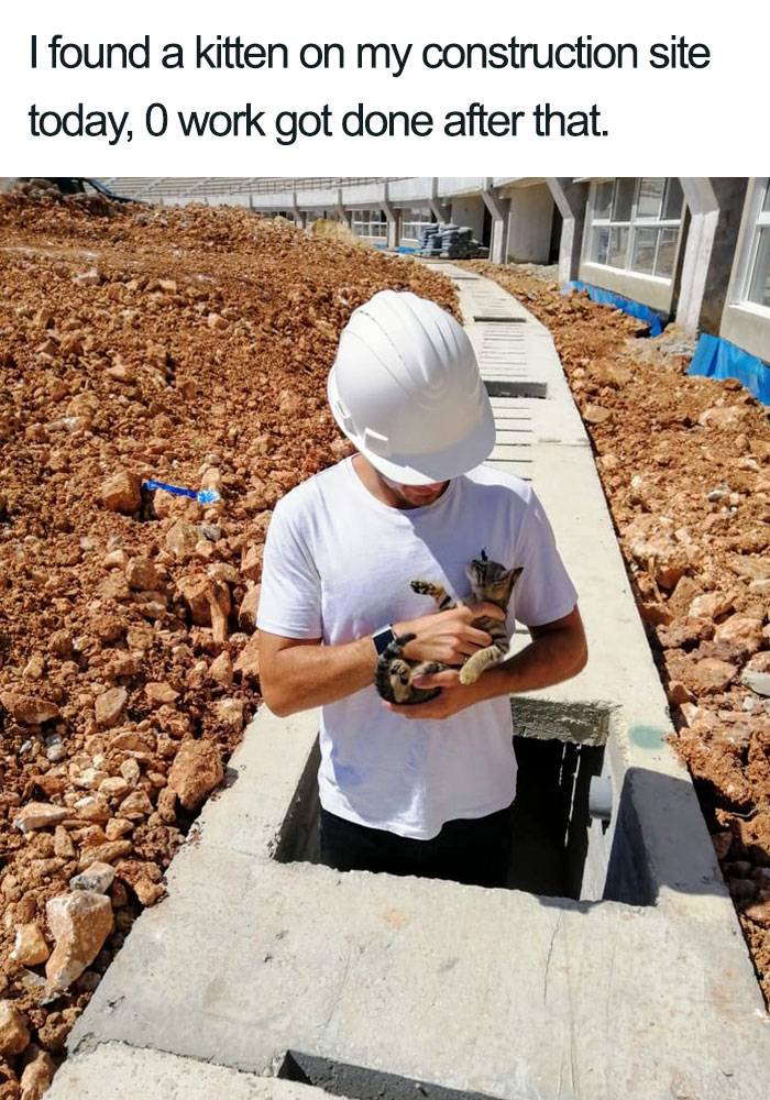 kitten in construction site wholesome cat posts