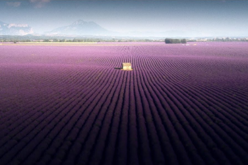 landscape lavender video samir belhamra