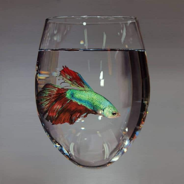 little fish in water in glass young sung kim hyperrealism