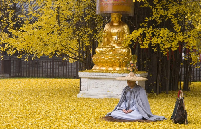 man praying in ocean of gingko tree leaves