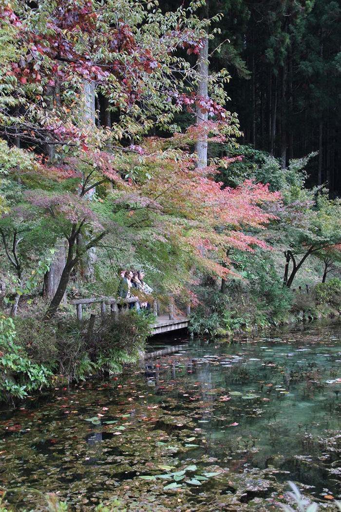 monets pond japan beautiful scenery