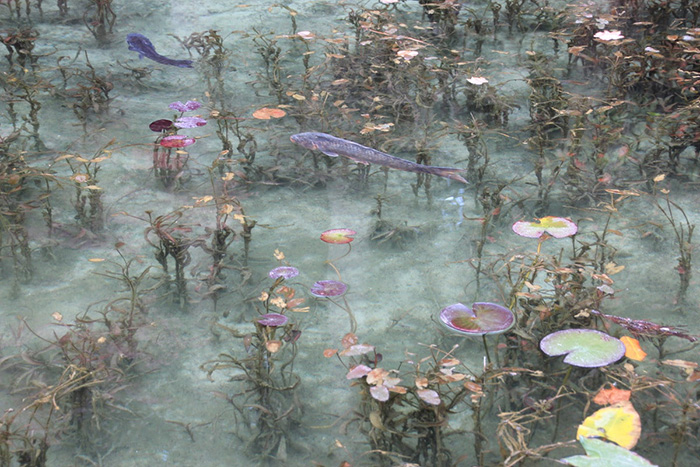 monets pond japan claude monet water lilies