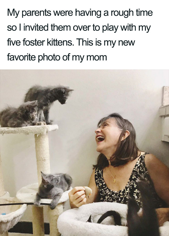 mother with cats wholesome cat posts
