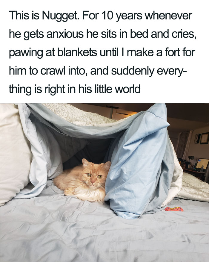 nugget in a blanket fort wholesome cat posts