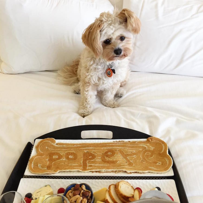 pancake popeye the foodie dog