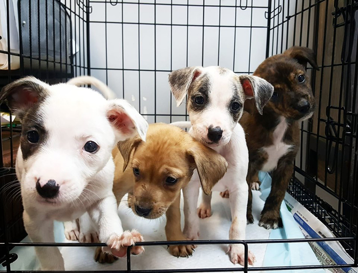 potcake place rescue puppies animal shelter