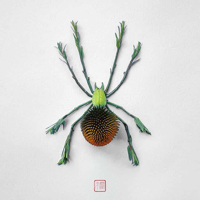 raku inoue natura insects black widow