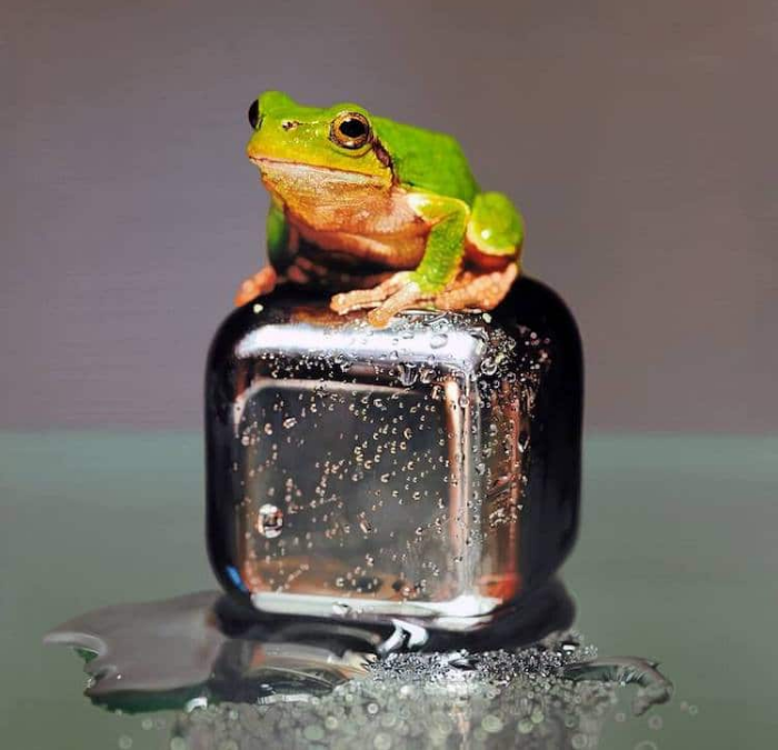 realistic frog painting young sung kim hyperrealism
