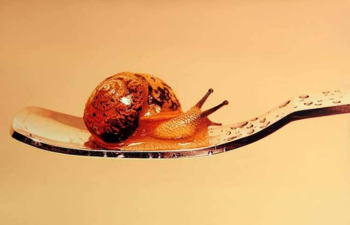 realistic snail painting young sung kim hyperrealism