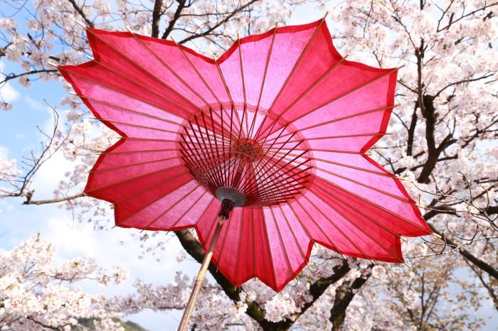 sakura-shaped parasol japanese umbrella