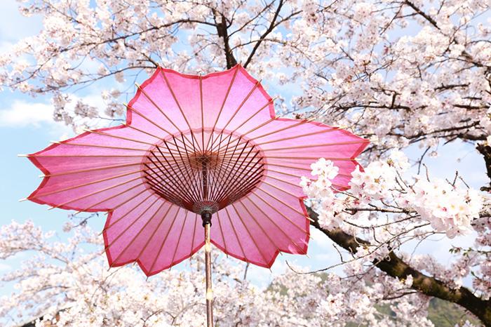 sakura-shaped parasol