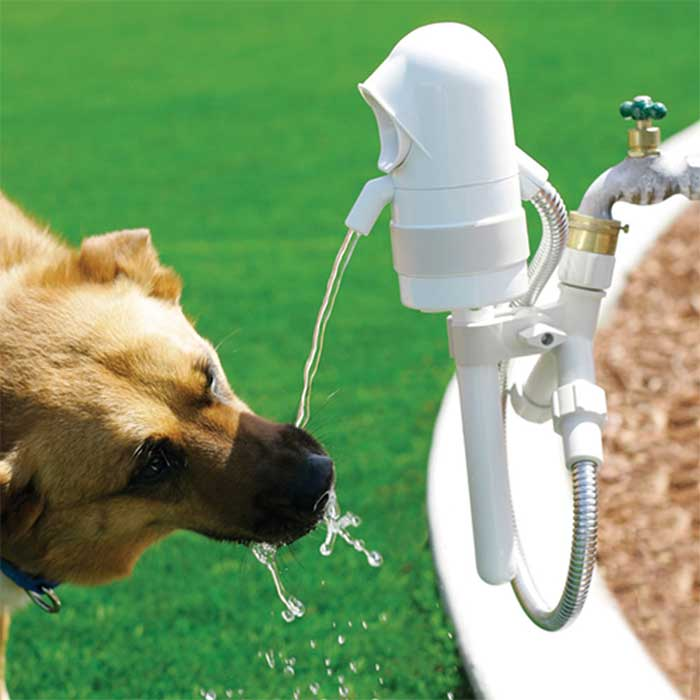 sample outdoor dog water drinking fountain