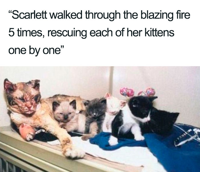 scarlett mother cat rescued her kittens from fire wholesome cat posts