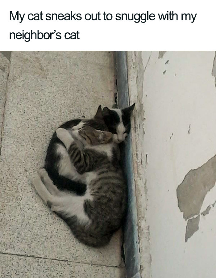 snuggling neighbors wholesome cat posts