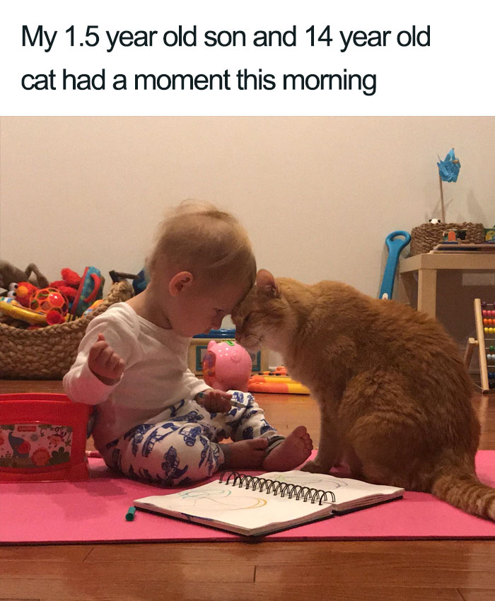 son and cat moment wholesome cat posts