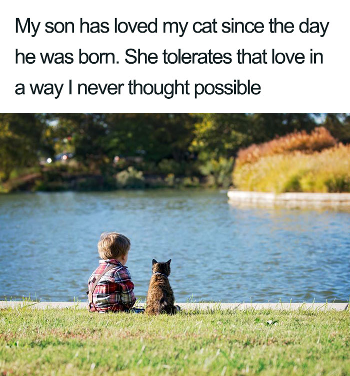 son loves cat so much wholesome cat posts