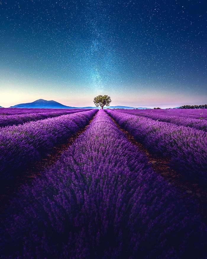 tree highlight lavender video samir belhamra