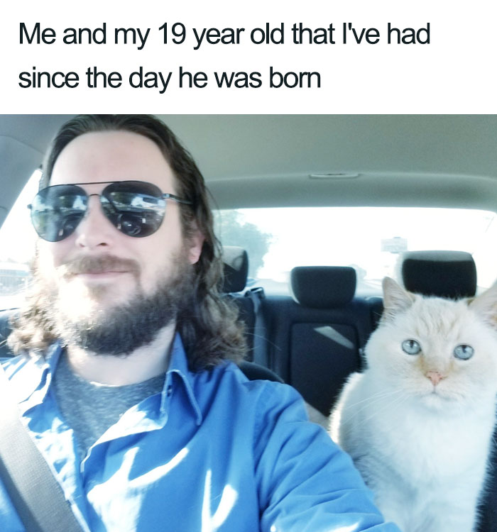 with 19 year old wholesome cat posts