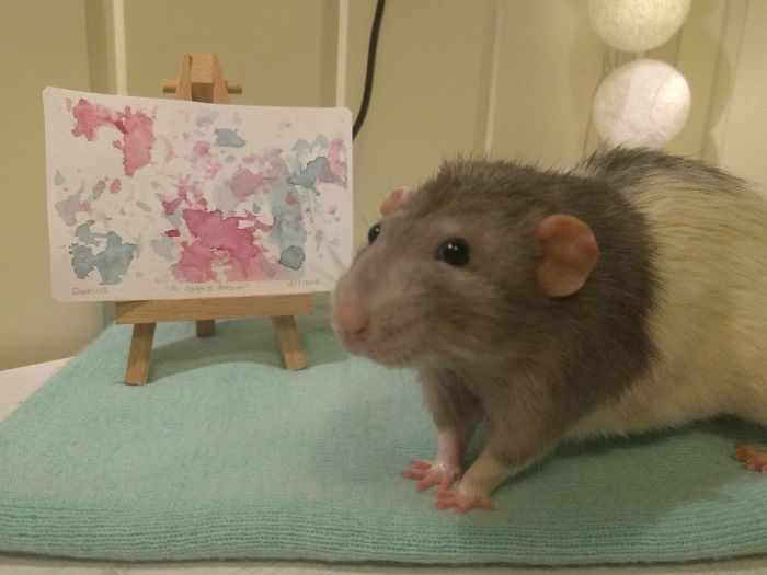 Darius The Painting Rat Next To His First Painting