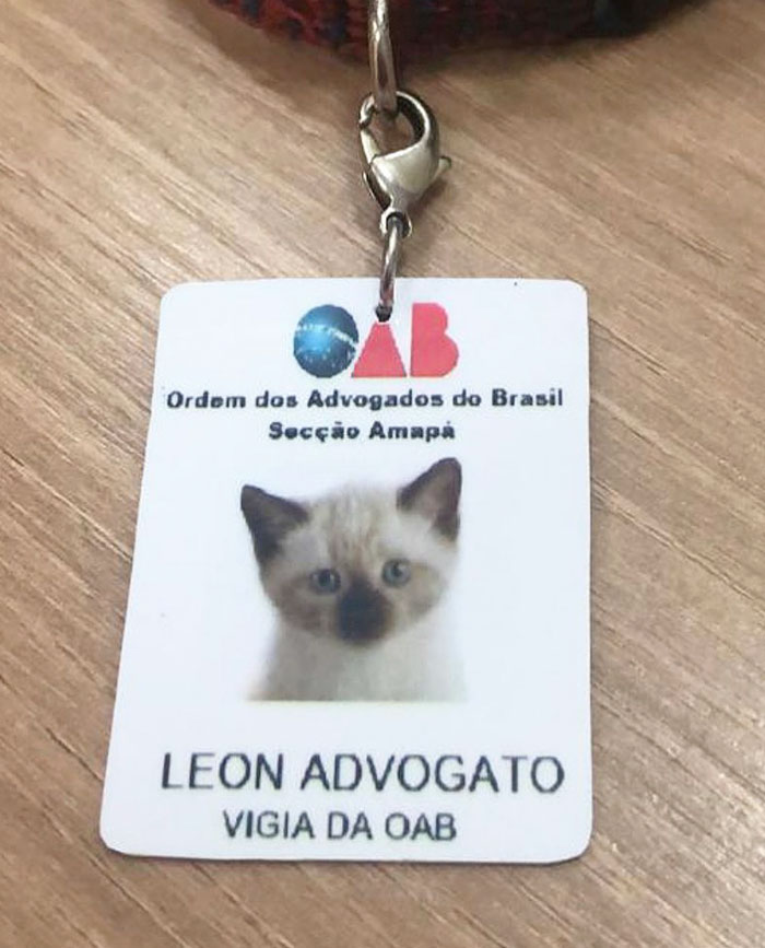 Lawyer Cat Name Tag