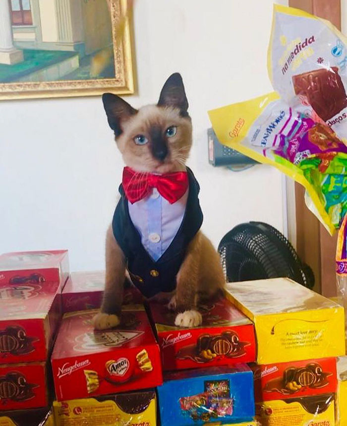 Dr Leon the Lawyer Cat standing on top of some candy boxes