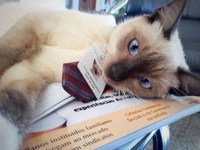 Lawyer Cat Selfie