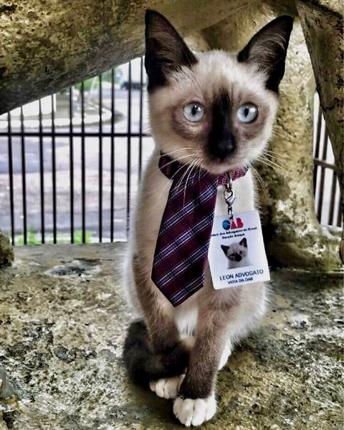 Dr Leon the Lawyer Cat wearing a necktie