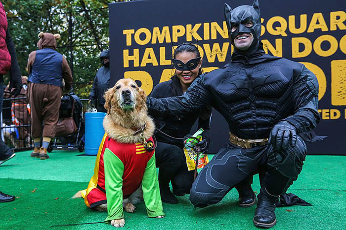 Batman and Robin Dog Costume