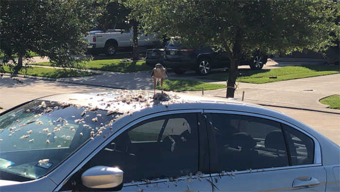 birds being jerks car dinner plate