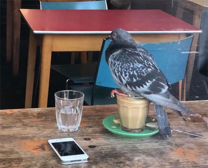 birds being jerks coffee seater