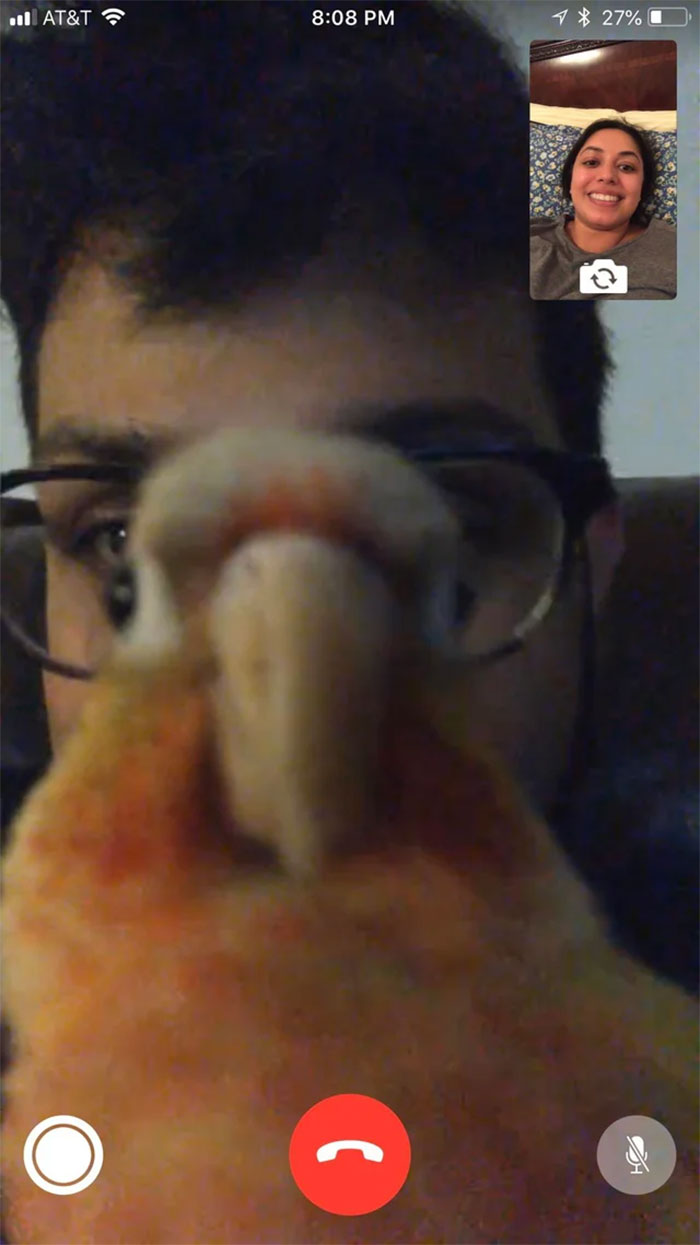 birds being jerks facetime