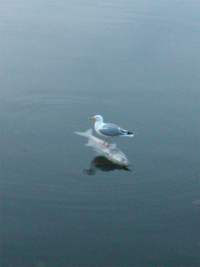 birds being jerks fish boat