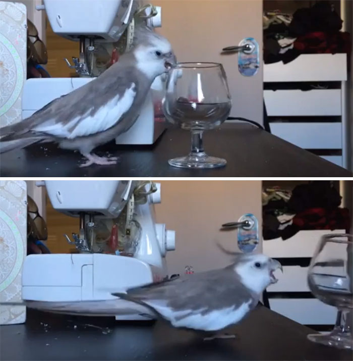 birds being jerks glass shatter