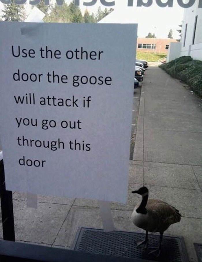 birds being jerks guard goose
