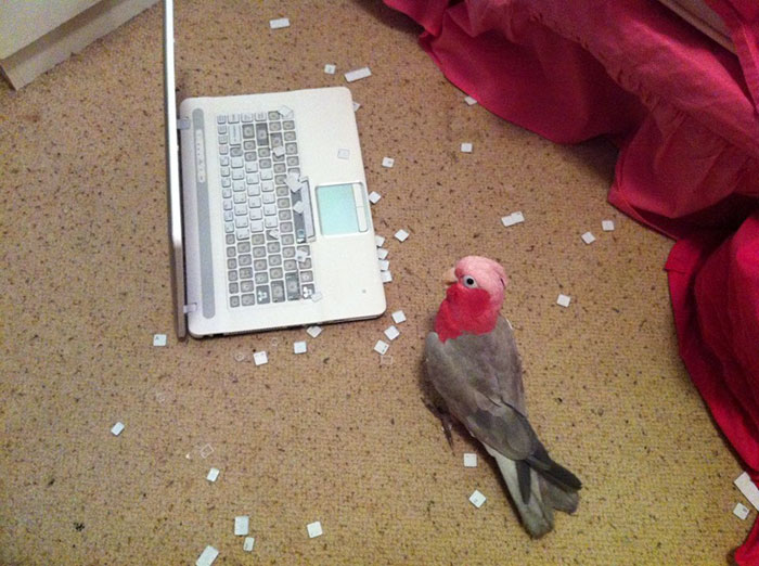birds being jerks keyboard destroyer
