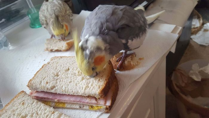 birds being jerks sandwich