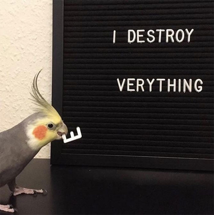 birds being jerks spell destroyer