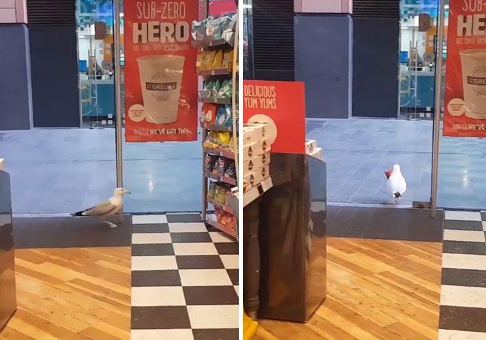 birds being jerks store theft