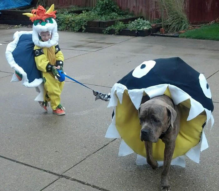 Bowser and Chomp Costume