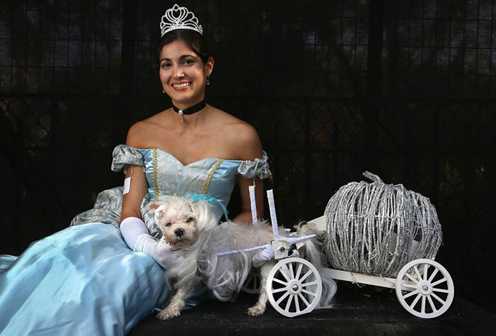 Cinderella Carriage Dog Costume