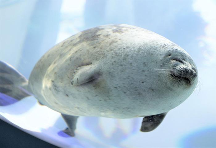 felissimo blob seal pillow arare-chan
