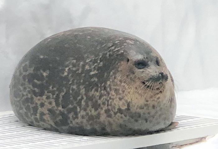 felissimo blob seal pillow yuki-chan