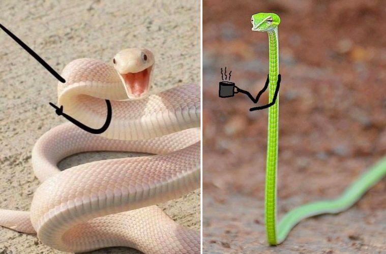 funny snake pics