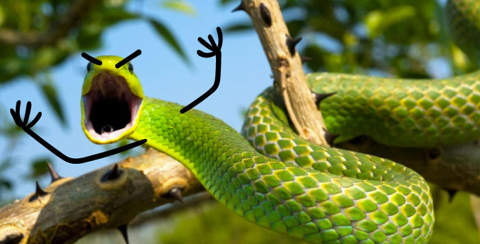 funny snakes pics doodle angry