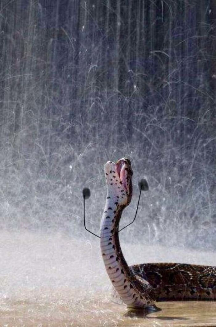 funny snakes pics doodle crying in the rain