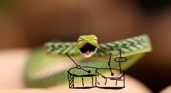 funny snake pics doodle drummer