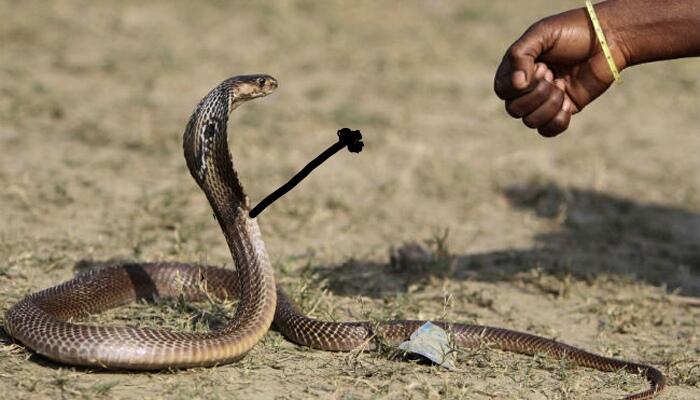 funny snake pics doodle fist bump