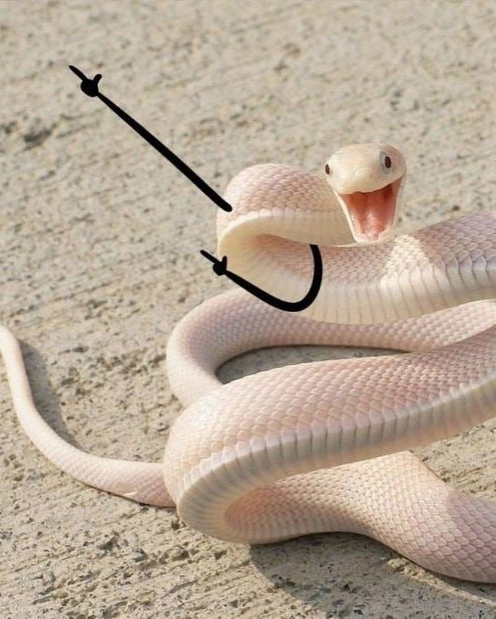 funny snakes pics doodle hey gurl