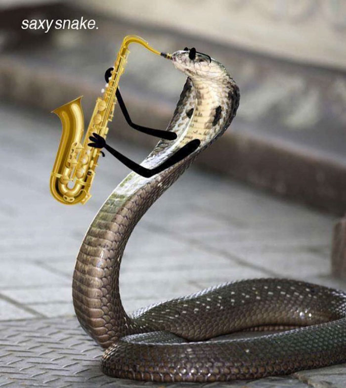 funny snakes pics doodle jazz