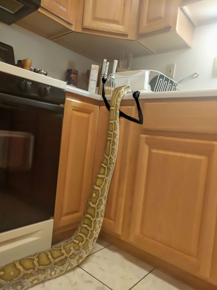 funny snake pics doodle knife thief